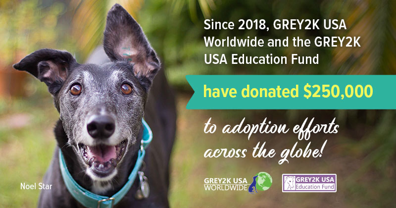 GREY2K supports greyhound adoption