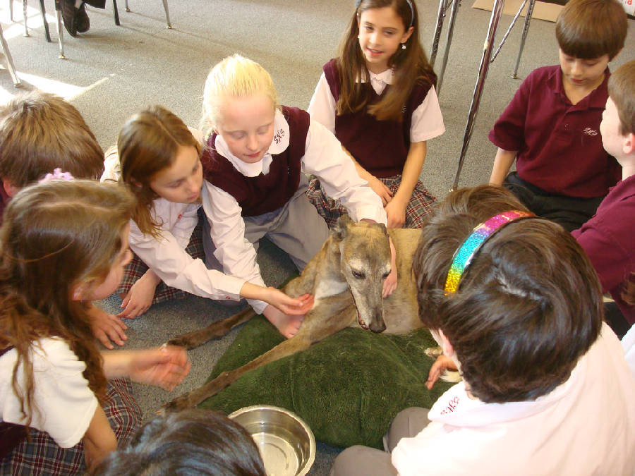 Zoe the greyhound at Sacred Heart Elementary School, NH