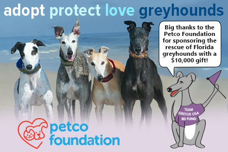 Petco Foundation sponsors Florida greyhounds